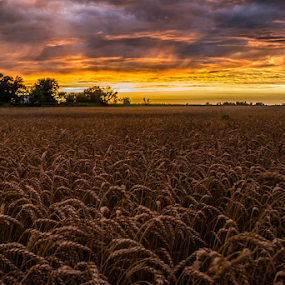 Country Sunset by Andrew Savasuk - Landscapes Sunsets & Sunrises ( wheat, sunset, country )
