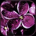Raindrops on lilac icon