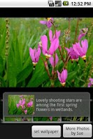 Screenshot of Wild Alaska Flowers