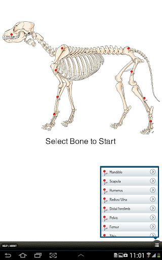 Small Animal Fracture Mgmt