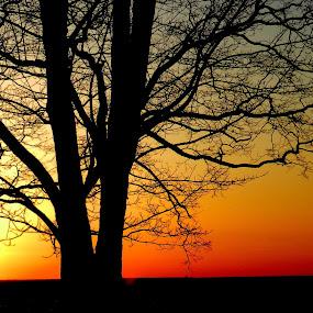 Webster Park sunset by Karen Jaffer - Landscapes Sunsets & Sunrises (  )