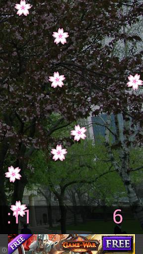 Sakura Challenge