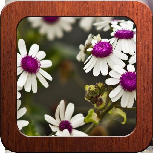 Best Flower Photo Frames
