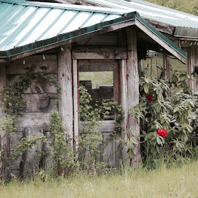 by T.M Mathis - Buildings & Architecture Decaying & Abandoned ( old, decaying, alone, fruit stand, abandoned, road side )