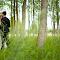 Wedding Green Forest.jpg