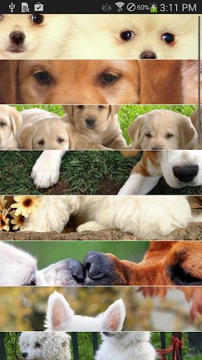狗的写真集 vol.4