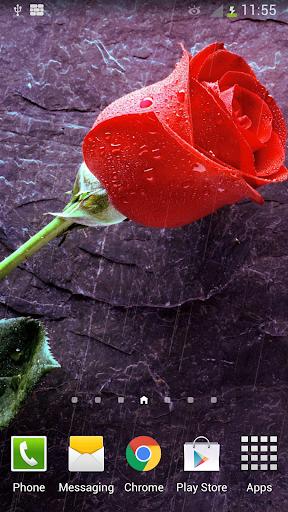 Rain Rose Live Wallpaper
