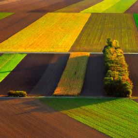Spring fields by Boris Michaliček - Landscapes Prairies, Meadows & Fields ( spring, austria, structures, fields )