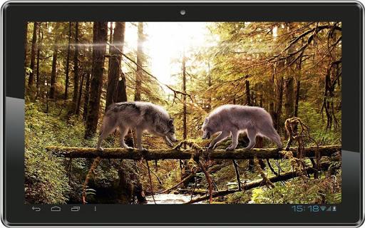 玩個人化App|Wolf Photos HD live wallpaper免費|APP試玩