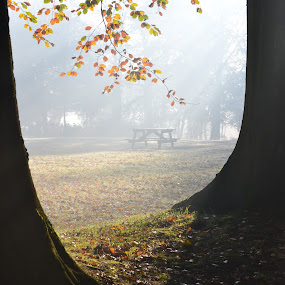 Nice Day for a Picnic by Carla Maloco - Uncategorized All Uncategorized ( tranquil, england, lancashire, nature, relax, autumn, color, colorful, fall, trees, tranquility, relaxing, autumn colour, united kingdom, mist, #GARYFONGDRAMATICLIGHT, #WTFBOBDAVIS,  )