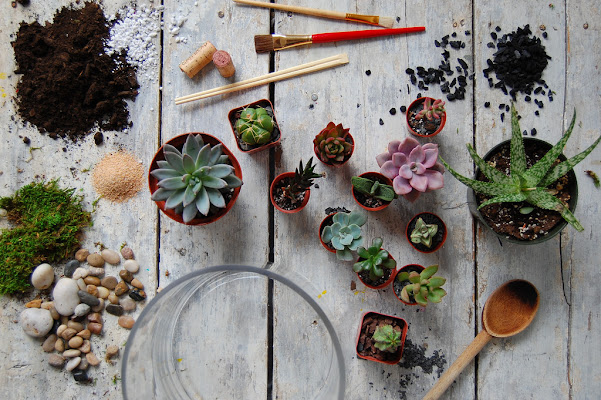 Learn how to build, and love, terrariums.