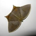 Uraniid-Mimic Moth