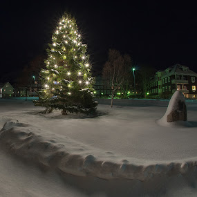 White Christmas by Rune Nilssen - Public Holidays Christmas ( lights, tree, snow, christmas, night, pine, lodingen, telenor,  )