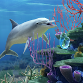 Dolphin CoralReef