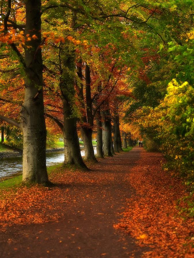 Autumndream by Ragnar Hermandrud - City,  Street & Park  City Parks