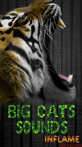 大きな猫の音