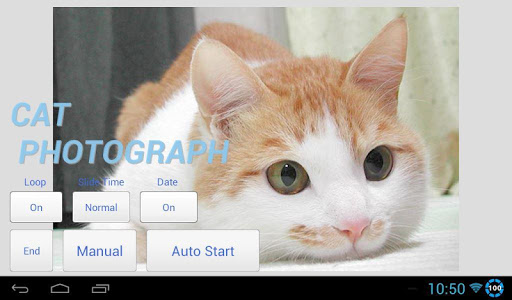 CATS PHOTO SLIDESHOW