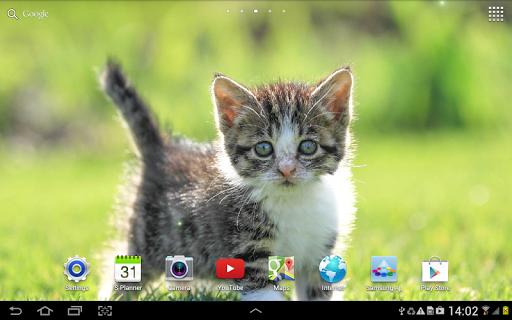 Cat Live Wallpaper 1.0.8 screenshots 13