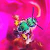 Green bee 🐝