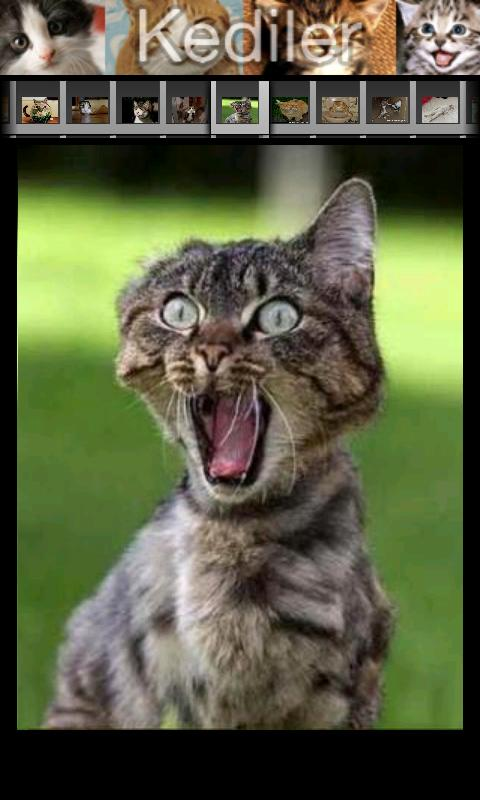 Kedi Sesleri - screenshot