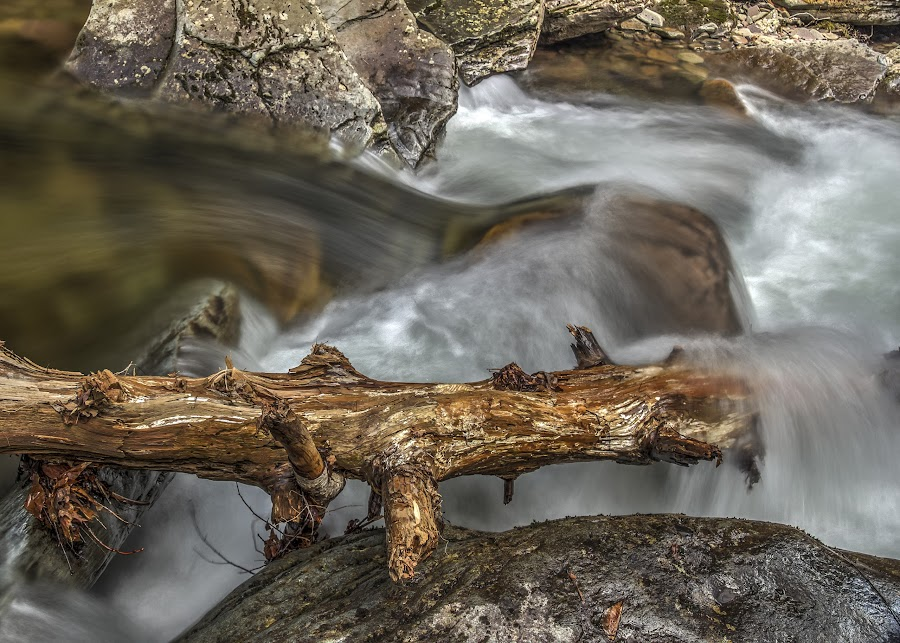 Rushing Water by Aaron Campbell - Nature Up Close Water ( water, stream, jamison city, hdr, pennsylvania, heberly run, spring, lichen, motion blur, nature, sullivan county, state game lands number 13, wet, sgl13, slow shutter )