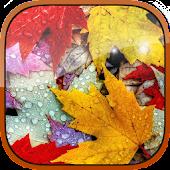 Autumn foliage Live Wallpaper