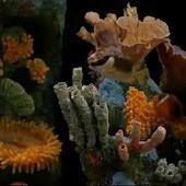 Fish Aquarium LWP