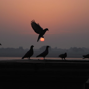 Grab the sun by Sayed Wasi Haider - Animals Birds (  )