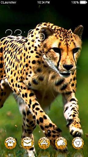 野生豹--C Launcher主题