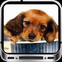 Sweet Dogs Wallpaper HD icon