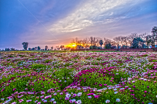 Colors Of Nature By KP Singh   Flowers Flower Gardens ( Punjab, Nature,  Garden