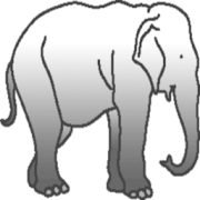 Dick elephant Here's More