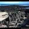 Galápagos marine iguana / Iguana marina de Galápagos