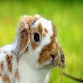 Bunny Wallpapers HD