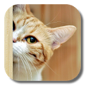 Kitty Cat Live Wallpaper icon