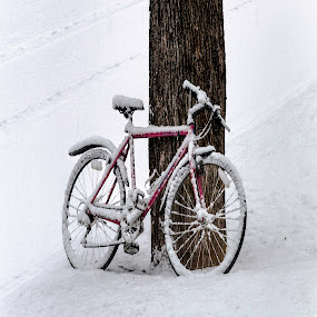 Bicycle in the Snow by David Stone - Transportation Bicycles ( winter, tree, ipswich, snow, square, bicycle )