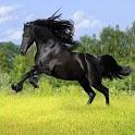Horses Game icon