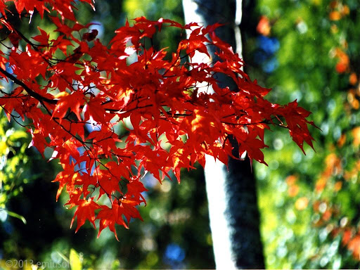 Autumn Leaves HD Wallpaper 1.2 Windows u7528 2