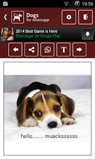 免費下載通訊APP|Dogs app開箱文|APP開箱王