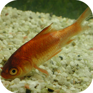 Fish Diseases Android Apps On Google Play