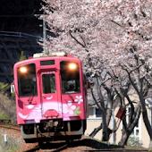 Train Puzzle:Cherry