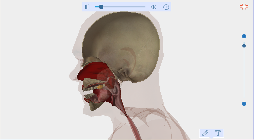 Human Anatomy Free EvoBooks - screenshot