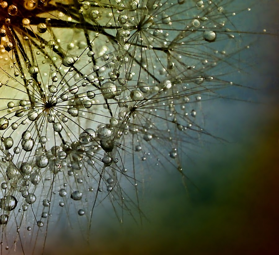 Untold Stories by Marija Jilek - Nature Up Close Natural Waterdrops ( water, stories (untold), drops, plants, natural waterdrops, nature up close )