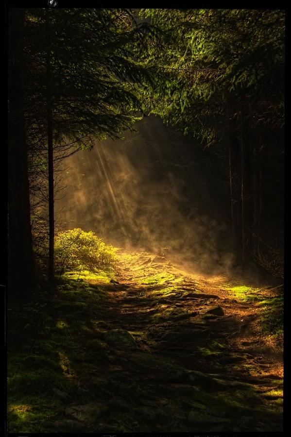 way to the Celtic hillfort Obří hrad III by Petr Klingr - Landscapes Forests ( hdr     celtic     hillfort     forest     sunlight, path, nature, landscape, , golden hour, sunset, sunrise, Earth, Light, Landscapes, Views, #GARYFONGDRAMATICLIGHT, #WTFBOBDAVIS )