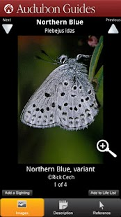 Audubon Butterflies - screenshot thumbnail