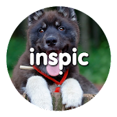 Inspic Puppies Wallpapers HD