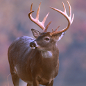 Whitetail Slideshow logo
