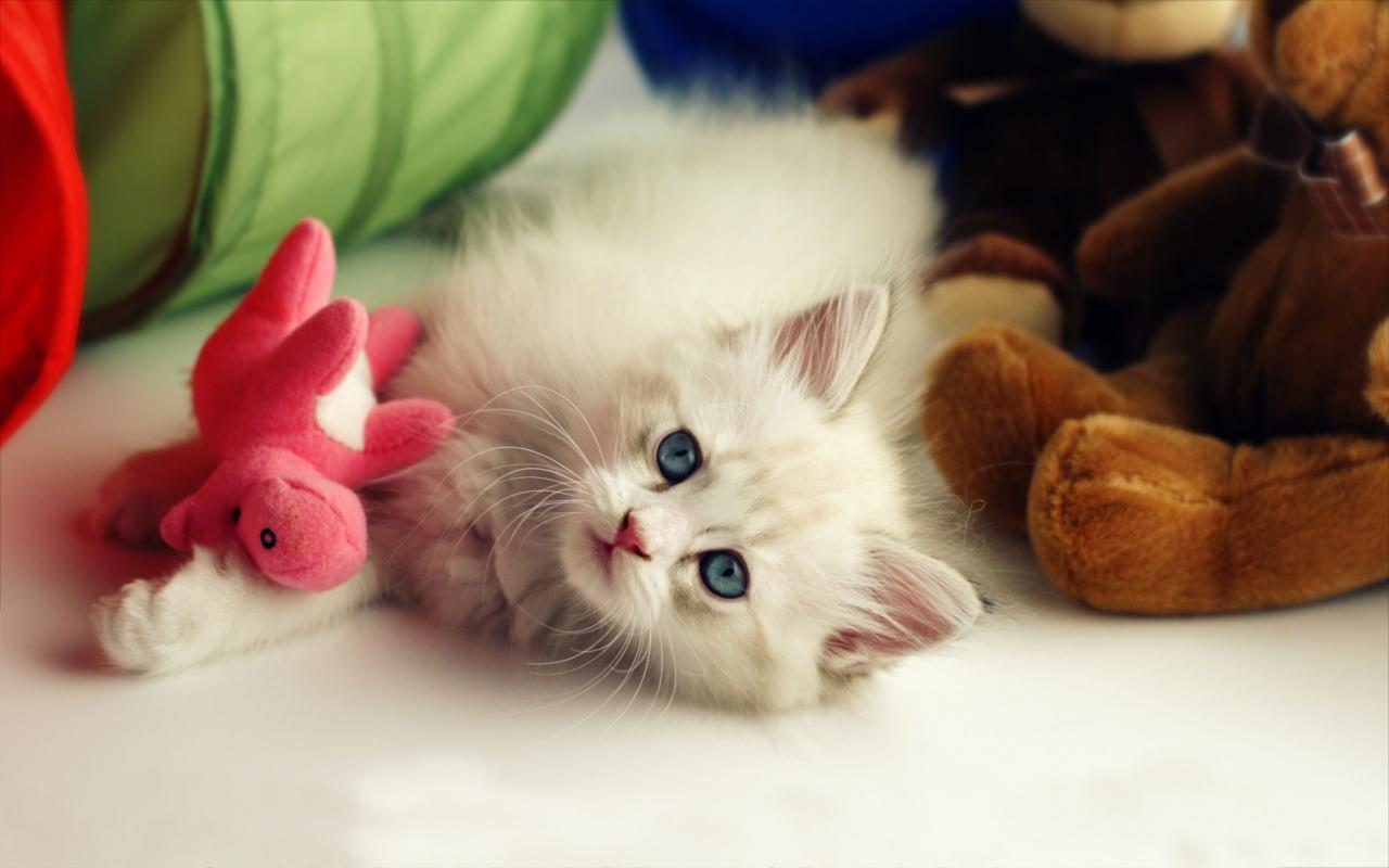 fluffy cat live wallpaper - android apps on google play