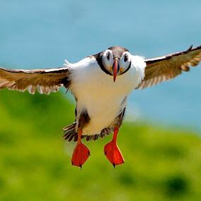 by James Blyth Currie - Animals Birds
