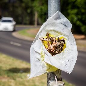 by Amro Labib - Transportation Roads ( bouquet, natural light, memorial, highway, speed, location, street, risk, life, pole, cars, drive, drink, flowers, sydney )